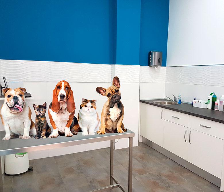 blog-mascotas