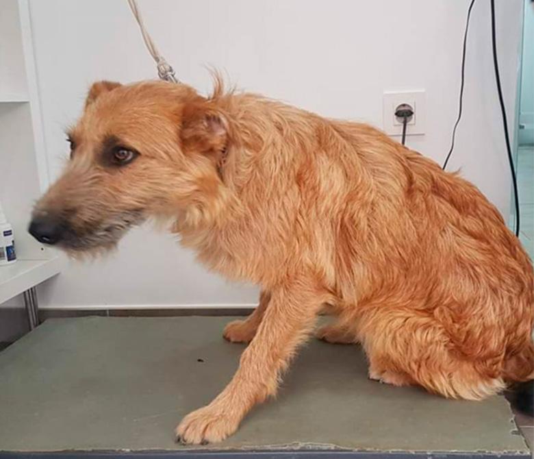 cirugia-perro-veterinario-lorca