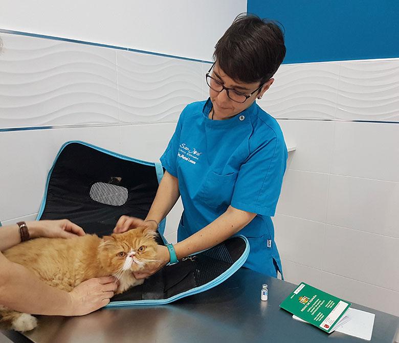 pacientes-veterinario