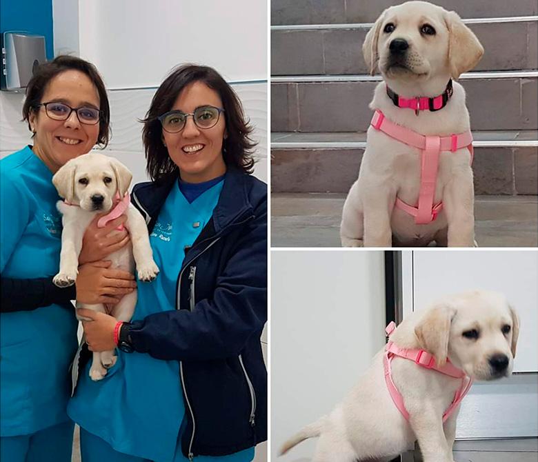 primeras-vacunas-cachorro-perro-veterinario-lorca