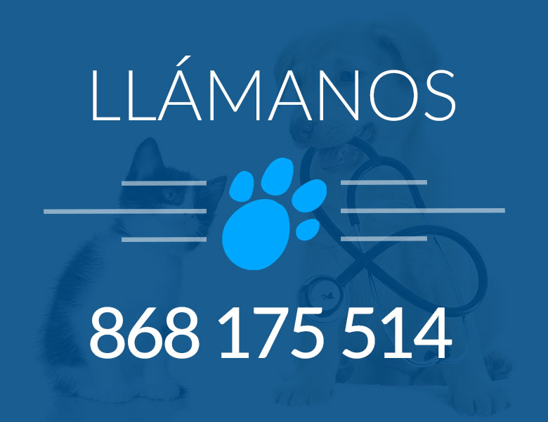 telefono-veterinario-lorca