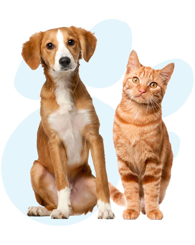 veterinario-perros-gatos-roedores-aves-reptiles